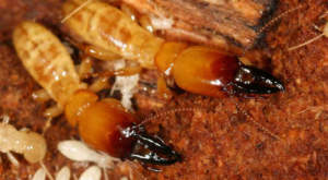 termite inspection san antonio