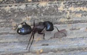 Ant Control - pest control san antonio