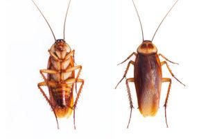 roach control san antonio