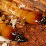 termite inspections - san antonio pest control